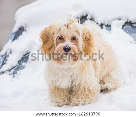 portrait of cute dog in snow - stock photo