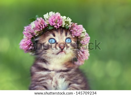 Portrait of cute dreaming little kitten crowned with a chaplet of clover - stock photo