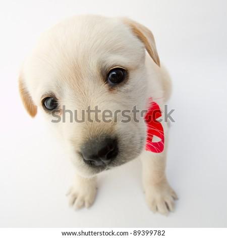 Portrait of cute labrador puppy - stock photo