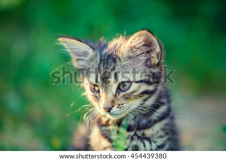 Portrait of cute little kitten outdoor in summer