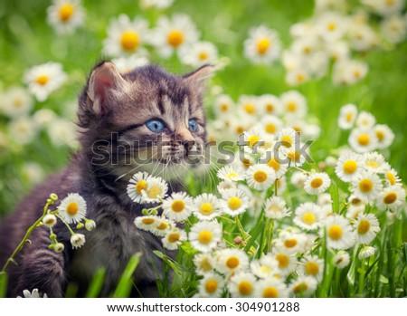 Portrait of cute little kitten outdoors in flowers - stock photo