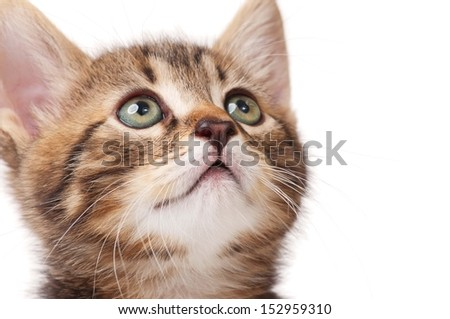 Portrait of cute little kitten over white background close-up - stock photo