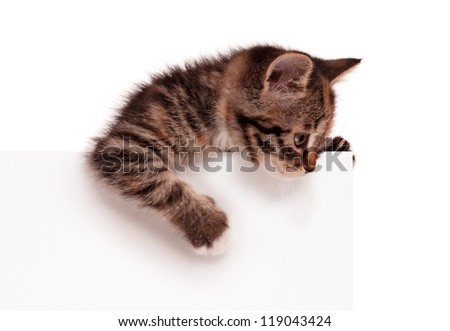 Portrait of cute little kitten with empty board on white background - stock photo