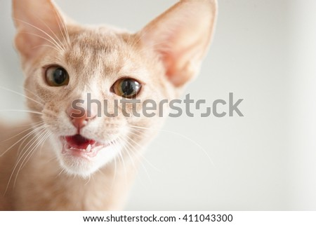 Portrait of cute little red cat. - stock photo