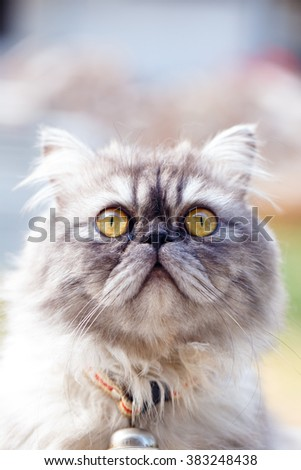 portrait of cute persian cat