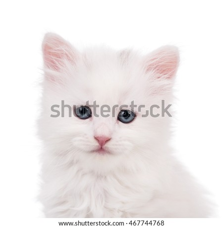 Portrait of cute siberian kitten over white background close-up