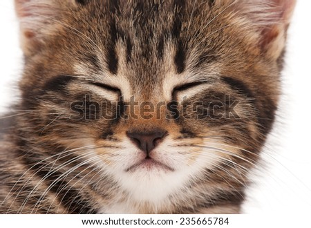 Portrait of cute sleepy kitten over white background close-up - stock photo