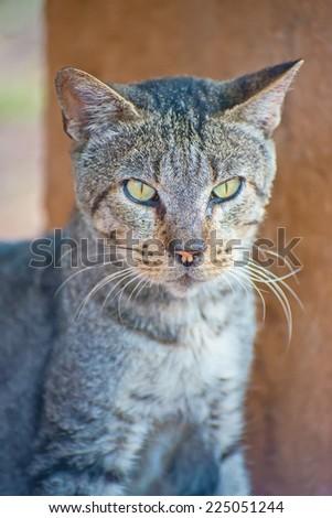Portrait of cute street cat outdoors. - stock photo