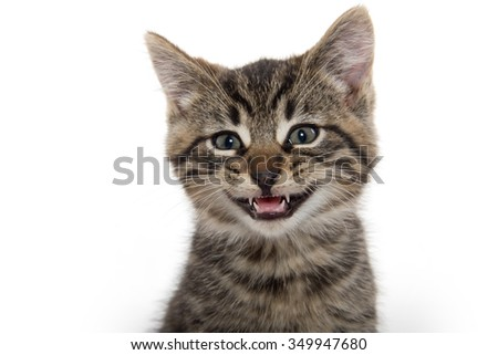 Portrait of cute tabby kitten isolated on white background - stock photo