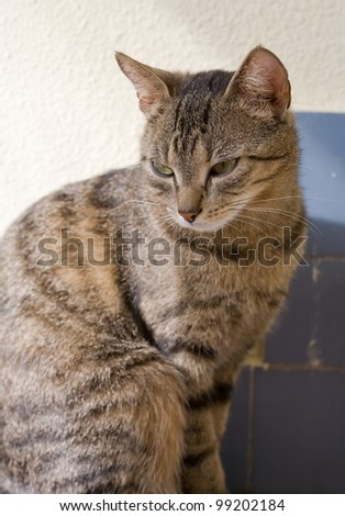 portrait of cute young brown mackerel tabby cat relaxing.