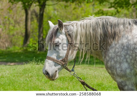 Portrait of dappled mare at spring pasture - stock photo