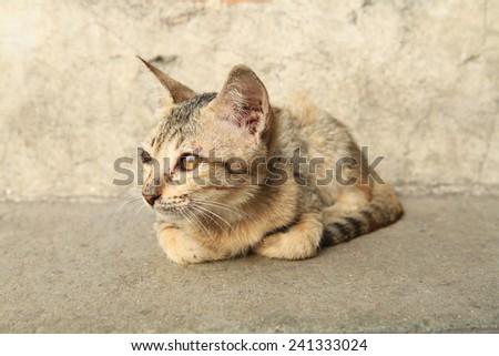 Portrait of dirty kitten on street - stock photo