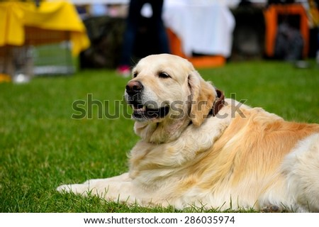 portrait of dog - stock photo