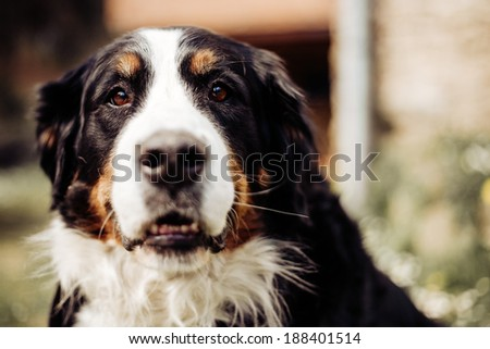 Portrait of dog in the forest, sunshine, vintage - stock photo