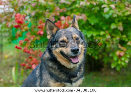 Portrait of dog in the garden in fall - stock photo