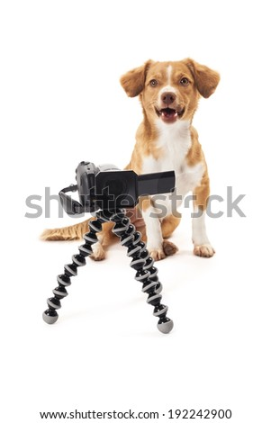 Portrait of dog with camcorder on tripod isolated over white background - stock photo