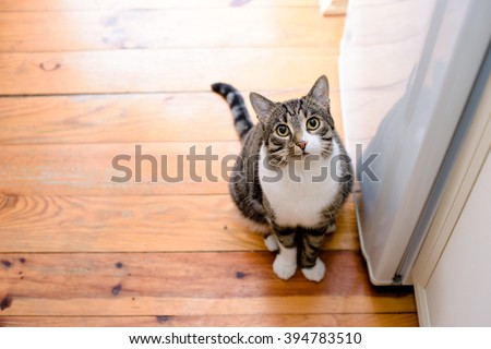 portrait of domestic tabby cat on floor
