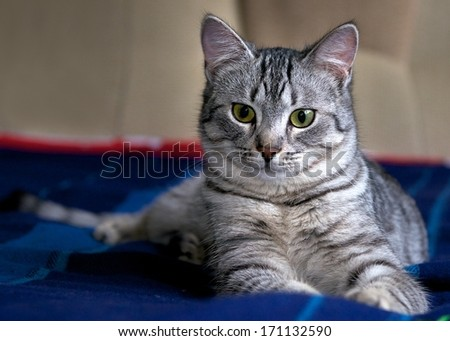 Portrait of elegant grey cat, young cat in blur dark dirty background, cat portrait close up, animals, domestic cat, cat with green eyes low ISO, grey cat.Selective focus to the face, focal focus. - stock photo
