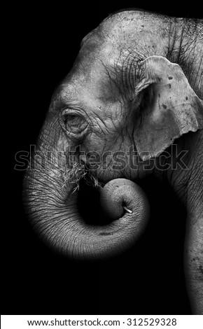 Portrait of elephant - stock photo