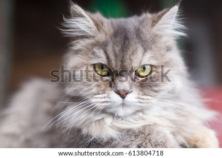portrait of fluffy cat