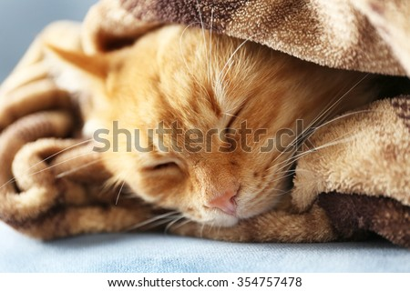Portrait of fluffy red cat on sofa with brown plaid, close up - stock photo