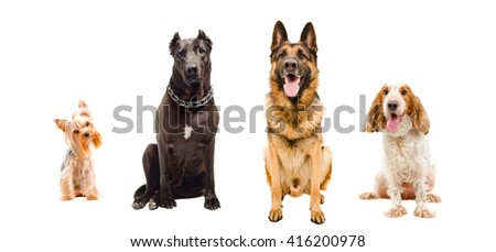 Portrait of four dogs sitting together isolated on white background - stock photo