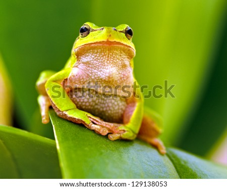 Portrait of Frog