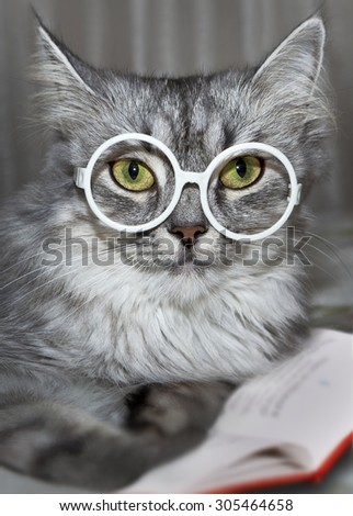 Portrait of funny cats in glasses with a book - stock photo