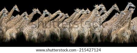 portrait of giraffe - stock photo