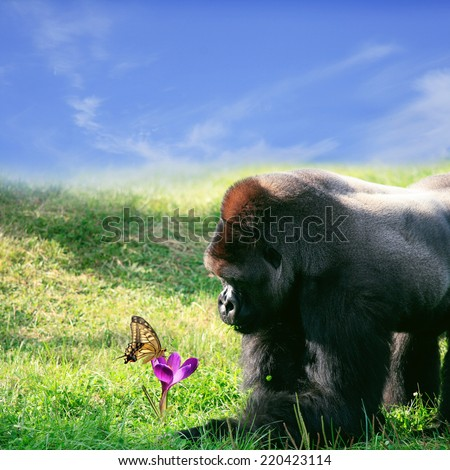 Portrait of gorilla and butterfly - stock photo