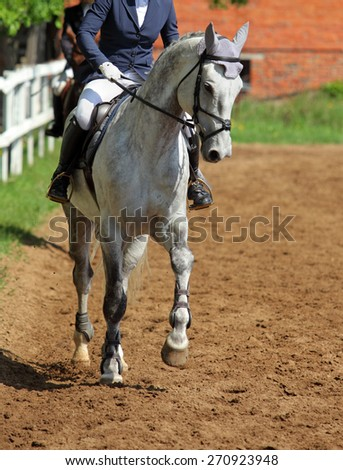 Portrait of gray dressage horse on sports platz - stock photo