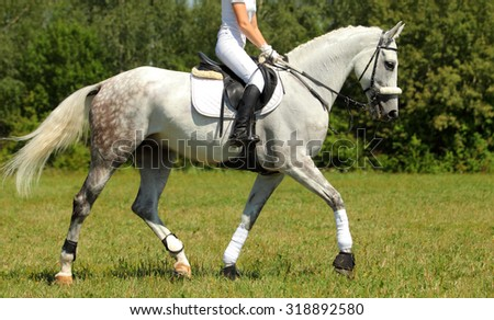 Portrait of gray horse on sports training platz - stock photo