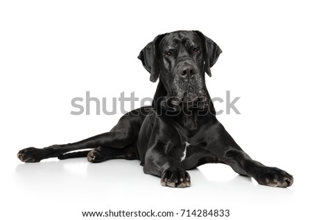 Portrait of Great Dane on white background