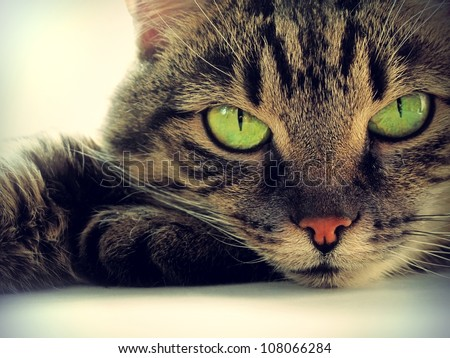 Portrait of green-eyed cat - stock photo