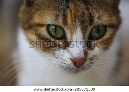 Portrait of green-eyed cat. Cat looking. - stock photo