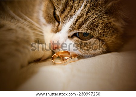 Portrait of green-eyed cat is lying  next to wedding rings - stock photo