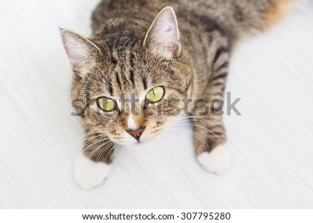 Portrait of green-eyed cat is lying on white background - stock photo