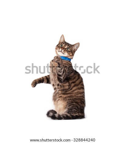 Portrait of green eyed cat isolated on white background - stock photo