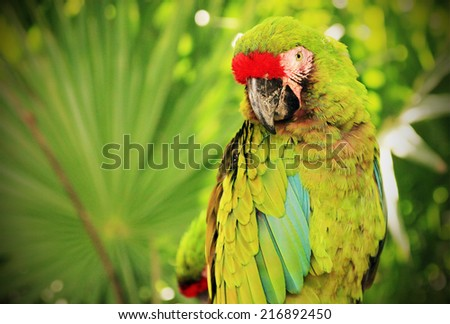 Portrait of green Macaw parrot against jungle background - stock photo