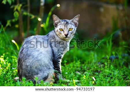 Portrait of grey cat at outdoor. - stock photo