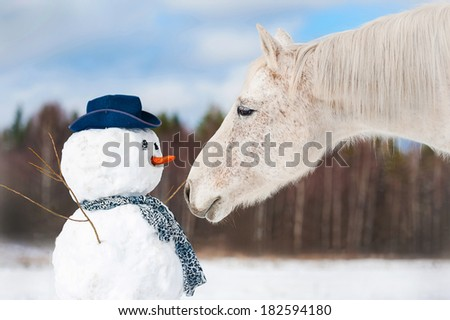 Portrait of grey horse with snowman - stock photo