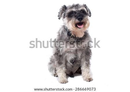 Charlie Bard S Portfolio On Shutterstock
