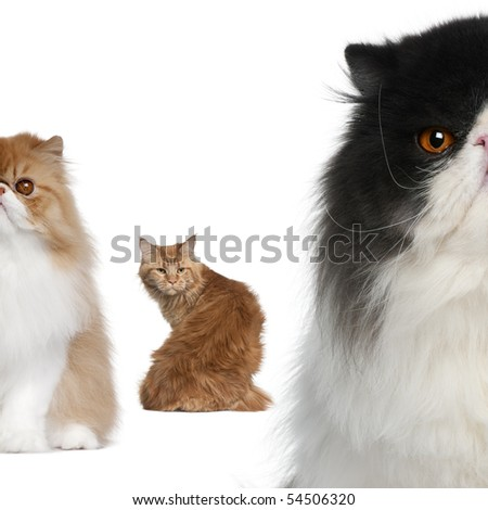 Portrait of group of cats in front of white background - stock photo