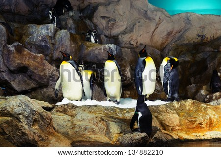 Portrait of group of king penguins - stock photo