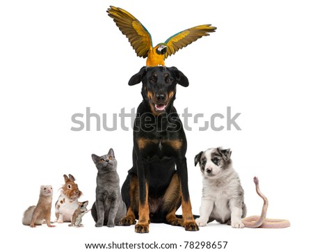 Portrait of group of pets in front of white background - stock photo