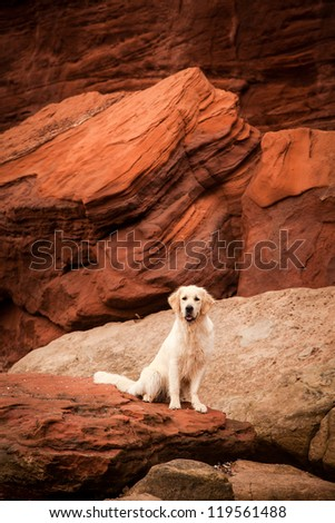 Portrait of happy dog at the red rocks of the Jurassic Coast - stock photo