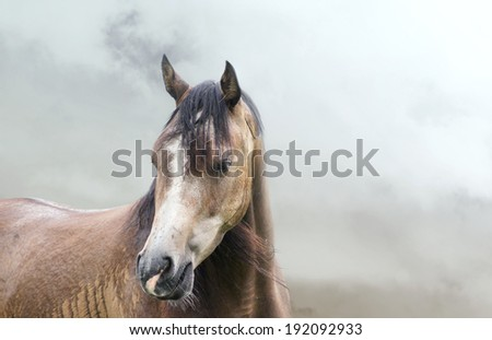 Portrait of horse in  mist in rain