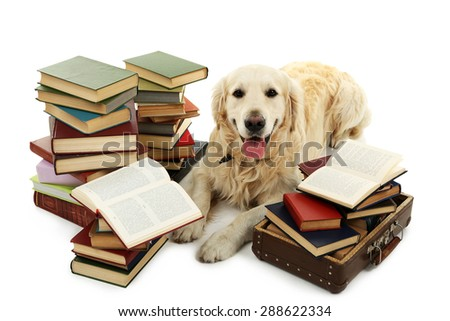 Portrait of Labrador with pile of books isolated on white - stock photo