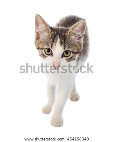 Portrait of little cat looking to camera, isolated on white - stock photo