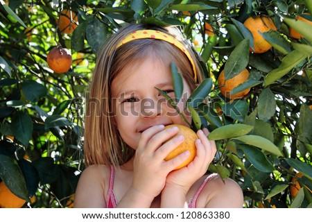 Portrait of little girl in orange grove picking oranges - stock photo